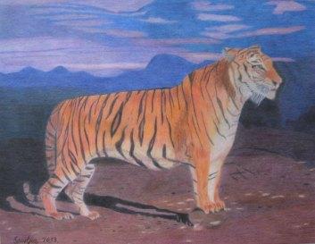 Crtež - Tigar, olovke u boji