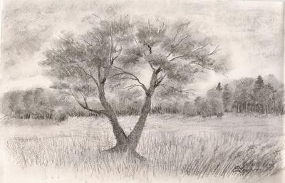 Drvo u pejzažu
