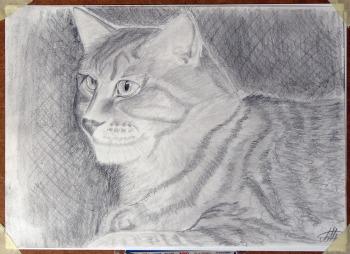 Crtanje Olovkom-Mačak